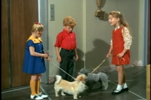 Taking their friend for a walk, the kids meet up with the building's French poodle.