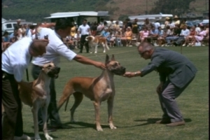 What follows is a tedious display of dog show stock footage.