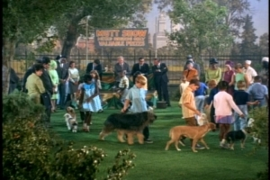 All these dogs and kids must have made for a fun day for Anissa Jones and Johnnie Whitaker--and a long day for director Charles Barton.