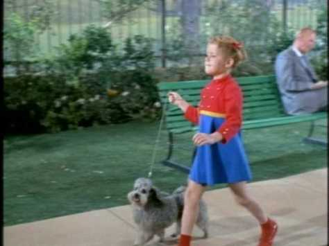 We see her walking a poodle...