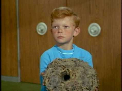 Jody wants to take this hornets nest that he found on vacation to school.